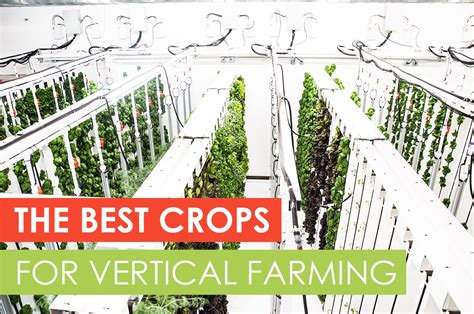 The Best Crops For Vertical Farming