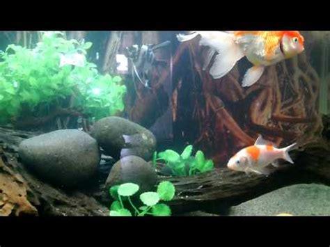 Pakan Ikan Hias Otomatis ikan mainan aquarium toys kuya