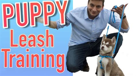 how to teach your puppy to walk on a leash how to your new puppy to walk on leash funnydog tv