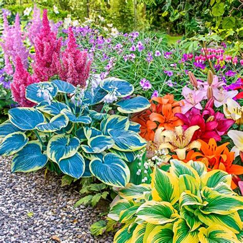 Flowering Perennials For Shade Gardens Best 25 Shade Perennials Ideas On Shade Plants Shade Garden Plants And Shade Flowers
