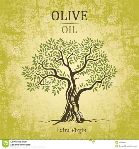 Olive Tree Olive Oil Vector Olive Tree On Vintag Stock Vector Illustration Of Backdrop Vintage Family Tree Royalty Free Stock Images Image 32018779