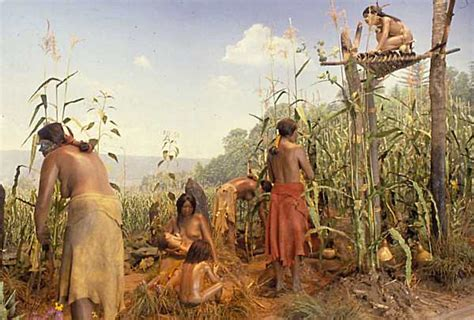 iroquois uses of maize and other food plants classic reprint books image