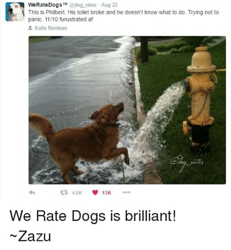 we rate dogs 25 best memes about we rate dogs we rate dogs memes