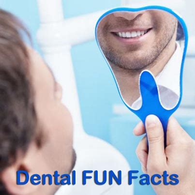 comfort dental lafayette in fun dental facts comfort dental lafayette indiana