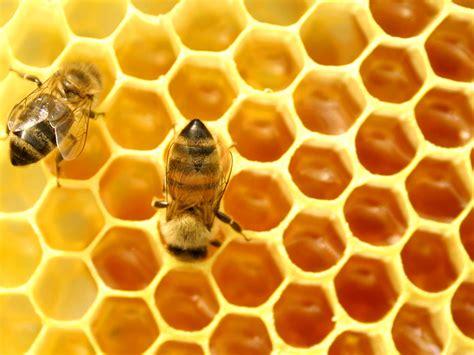 Honey vs Sugar in Your Tea   Second Cuppa