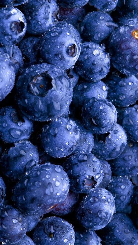 blueberry wallpaper blueberry fruit wallpaper images