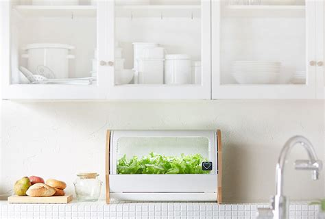 Countertop Hydroponics by Countertop Hydroponic Gardens Are It Easy To Grow