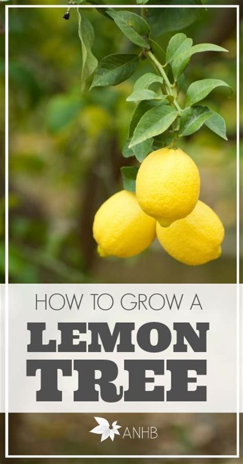 hardest plants to grow how to grow citrus indoors 1000 images about gardening sustainable living ideas on