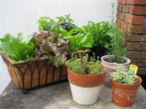 The Benefits of Container Vegetable Gardening   Desain