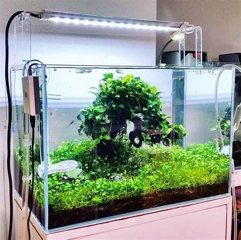 desain aquarium air tawar minimalis 26 model aquarium ikan hias minimalis terbaru 2018 dekor