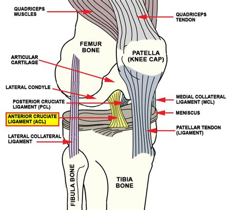anterior cruciate ligament acl injuries advanced
