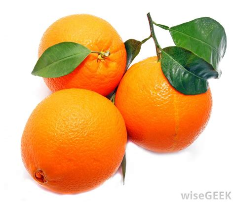 pictures of different breeds what are some different types of citrus fruits with pictures
