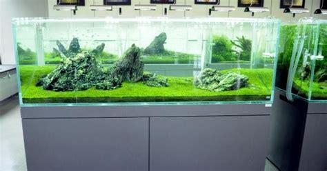 Custom Udang Hias Ekonomis Terima Pesanan Pembuatan Meja Aquarium Aquascape Bandung