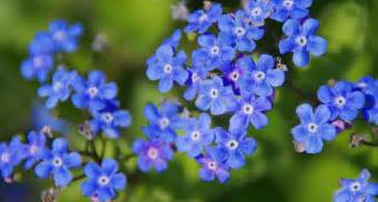 blue flowers 41 types of blue flowers proflowers