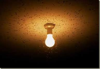 outdoor light bulbs that don t attract bugs does led landscape lighting attract bugs nightscenes
