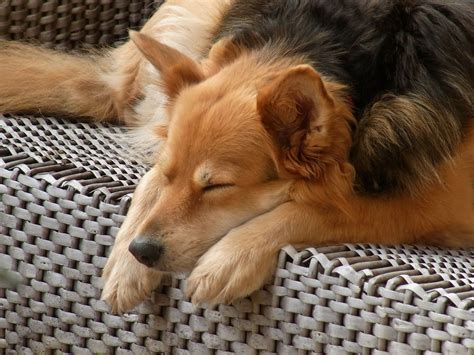how to make a puppy sleep how to make your own bed easy and and beds and costumes