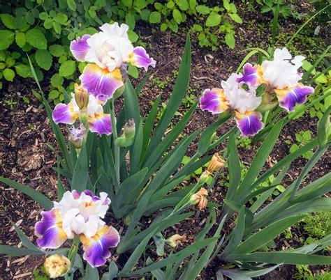 flower cutting garden visiting my flower cutting garden the martha stewart