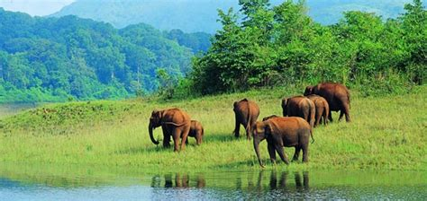 Home Design For Kerala by Periyar National Park Best Time To Visit Periyar National