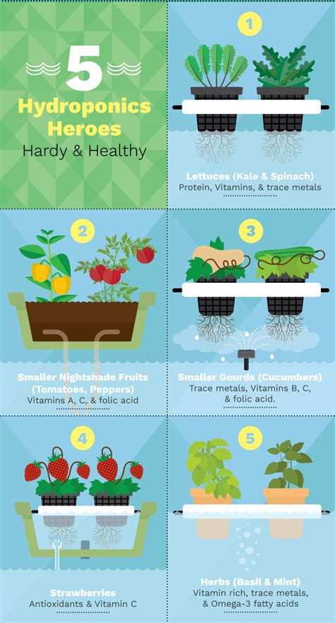 Gardening Nutrients 6 Different Hydroponic Gardening Systems For Growing Food