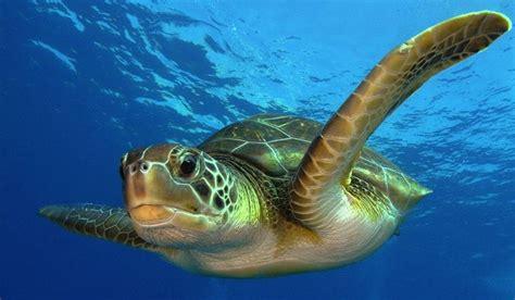 imagenes de animales de mexico animales en peligro de extinci 243 n en m 233 xico animalesde net