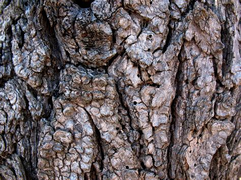 free tree bark nature texture texture l t