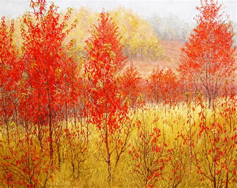 cherry trees in fall color sold richard g tiberius
