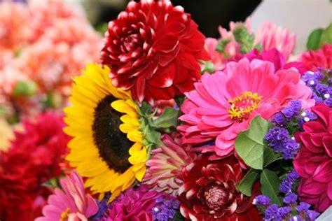 Fresh Flowers by Fresh Flowers Flowers Wallpapers