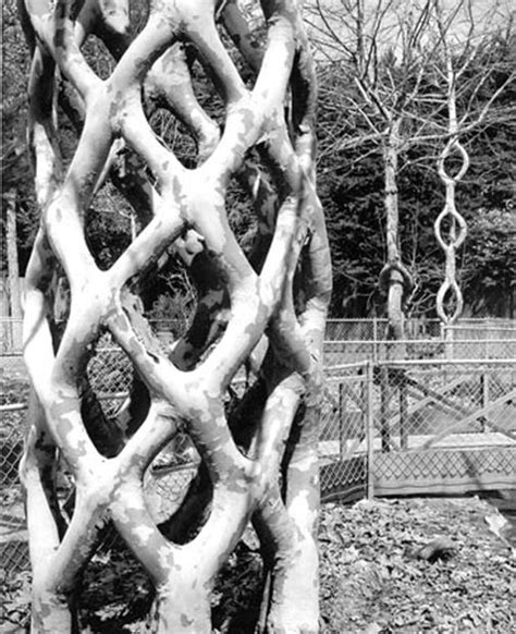 tree shaping images  pinterest topiaries