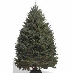 echter weihnachtsbaum types of real trees the home depot