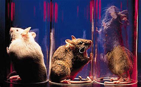 marc caron lab knockout mice reveal mechanism of dopamine regulation