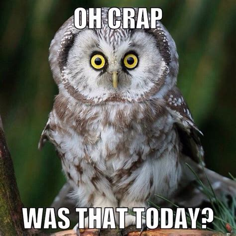 Funny Owl Memes - best 20 owl meme ideas on pinterest
