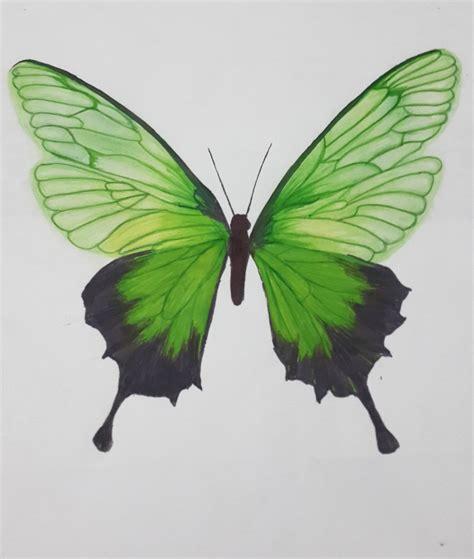 imagenes de mariposas a lapiz andy