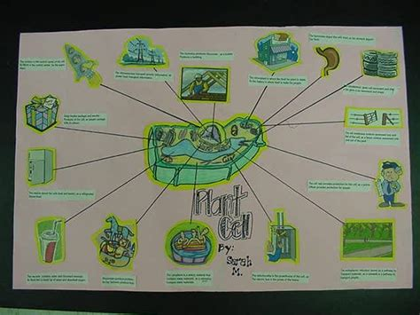 project collage template design projects mr mohn s biology home turf cell analogies collage