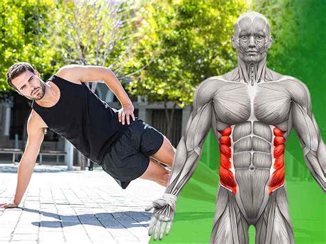 abdominal oblique muscles functional anatomy guide bodybuilding wizard