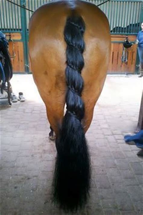 braided genitals hairs i wonder how many times the horse swatted it s tail and