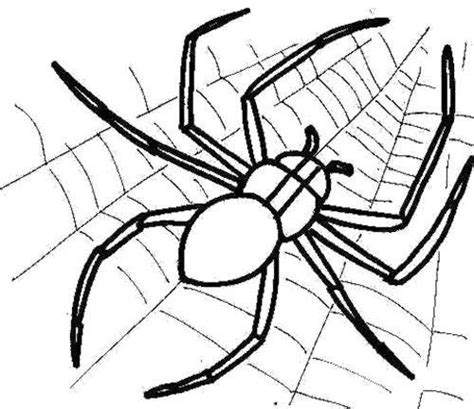 cute spider coloring pages 100 ideas to try about cute spider scary spiders