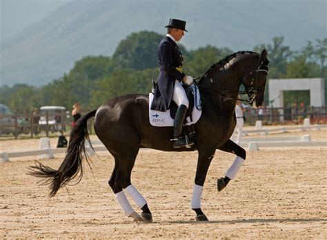 doma de caballos a la collserola horses noviembre 2009