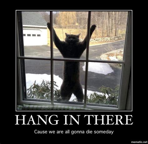 Hang In There Cat Meme - i need motivating off topic linus tech tips