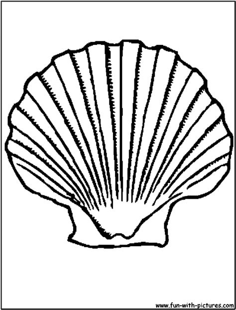 seashell color printable seashell coloring pages coloring home