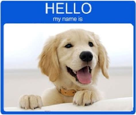 top golden retriever names names for puppies adultcartoon co
