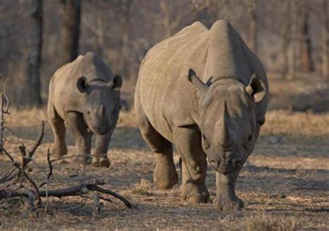 imagenes impactantes africa impactantes fotos de la caza ilegal en 193 frica taringa