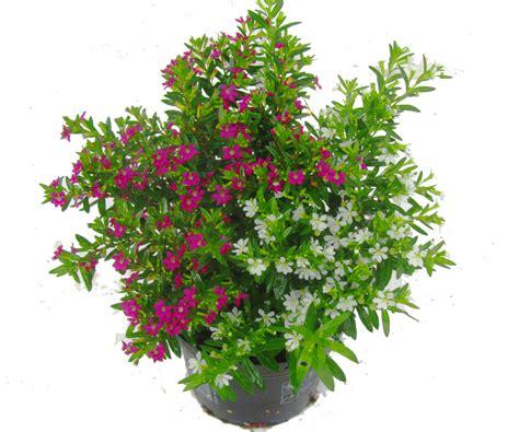 Pflanzen Kaufen 957 pflanzen kaufen garten pflanzen kaufen