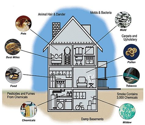 indoor air quality how to improve air quality in home