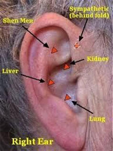 Detox Acupuncture Protocol by 17 Best Images About Auri On Ear Reflexology