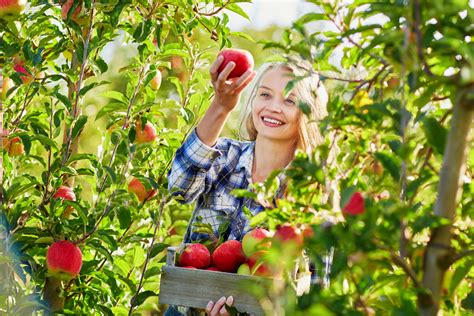 best places to go apple picking in the u s berry chatty