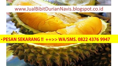 Bibit Durian Musang King Metro food supplements import export directory food supplements