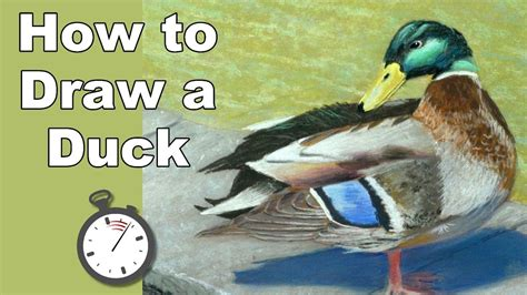 mallard duck home decor mallard duck home decor mp3 2 42 mb search music