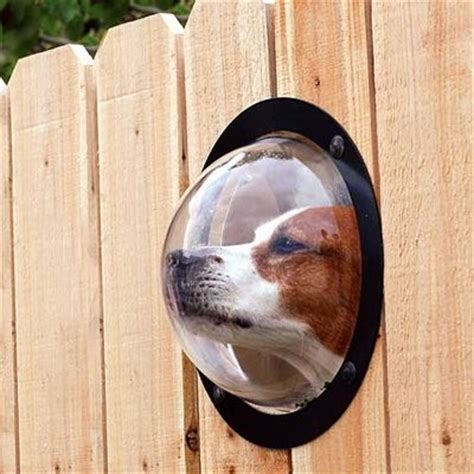 Contemporary Accessories For Your Pet by 8 Backyard Ideas To Delight Your Orvis News