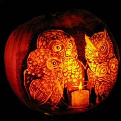 owl pumpkin owls owls and did i say owls pinterest