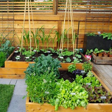 fix my backyard 57 best images about back yard fix up on